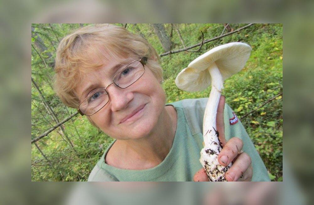 Intervjuu: miks valesti säilitatud seened tapvalt mürgised võivad olla