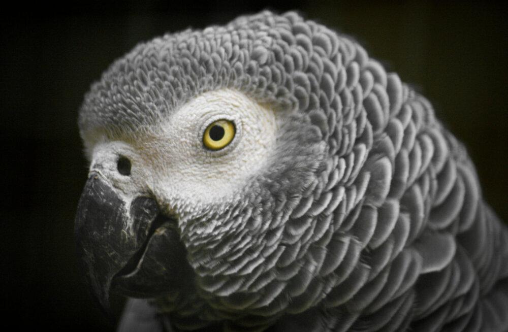 Tarkade kõlarite pahupool: kõnelda oskav papagoi tellib nutikõlari abil koju kõiksugu vidinaid