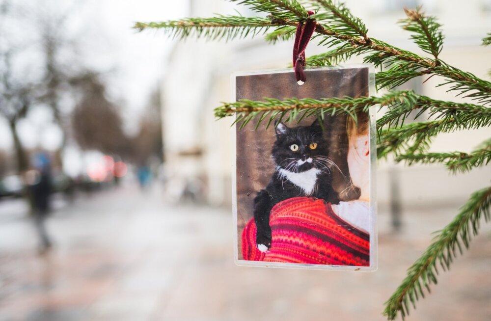 Jõulusoovid Tartu Jõulukuusel