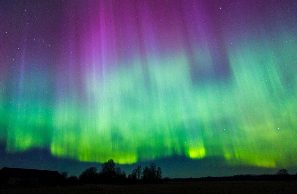 Virmaliste mäng käib taevas aasta ringi, kuid vaadelda saab seda alles pimedatel öödel. Selline vaatemäng avanes Pärnumaal Kullis 17. märtsil 2015, mida Rea-Peterson nimetab uskumatuks ja imeliseks ööks.