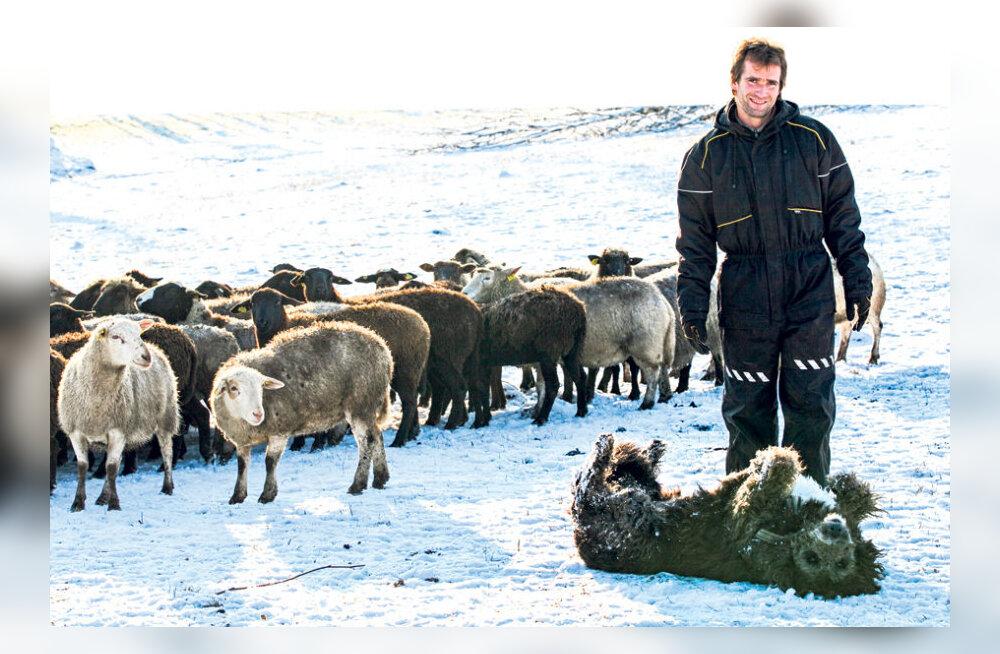Hundijahikeeld katkualadel hirmutab lambakasvatajaid