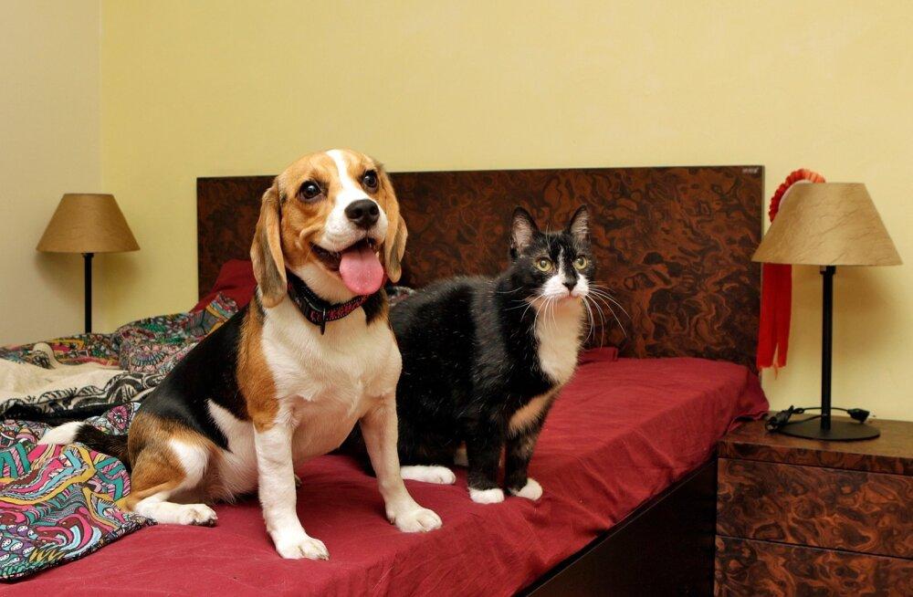Опасные животные: домашние питомцы могут наградить хозяина кучей разных заболеваний