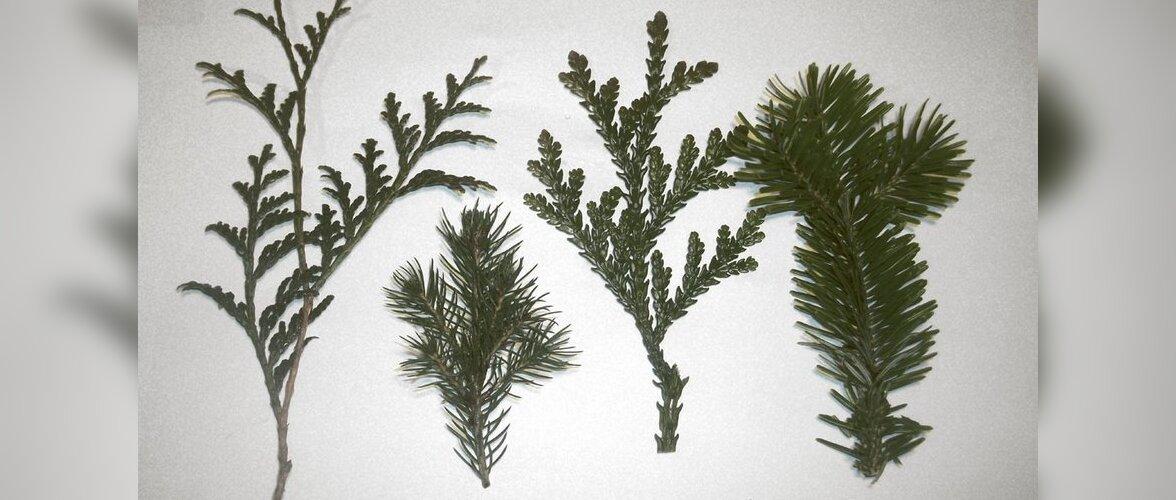 Pistoksast uusi puid ja põõsaid