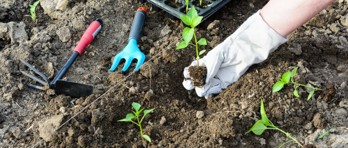 VIDEO | Aednik muutis vaevarikka aiatöö nutikal moel lihtsamaks. Ka sina saad seda teha!