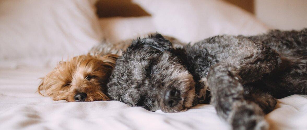 HEA TEADA | Kas lemmikloomaga voodi jagamine on ilmtingimata hea idee?