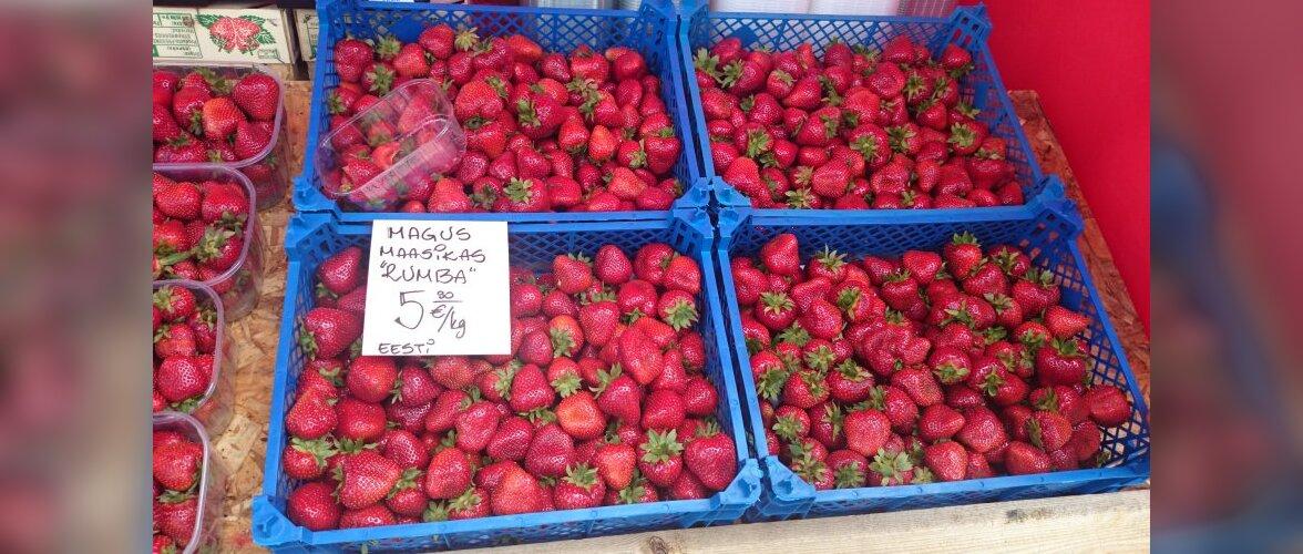Lugeja küsib: Kuidas saavad kodumaised maasikad olla hetkel nii suured?