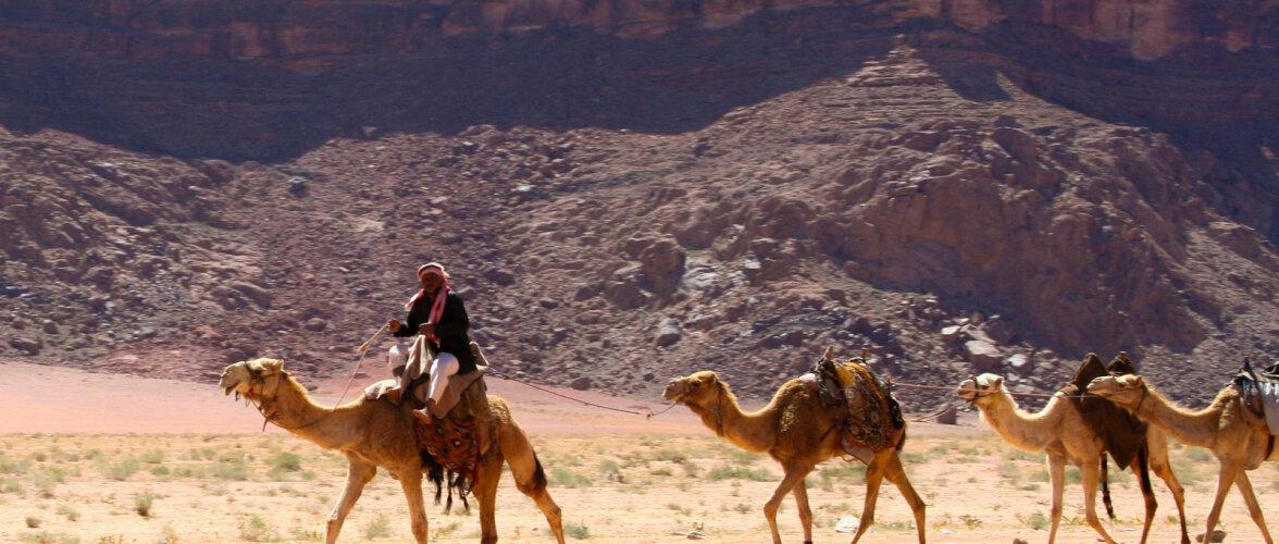 ФОТО. Что заставляет туристов шагать 40 дней по Синайской пустыне?