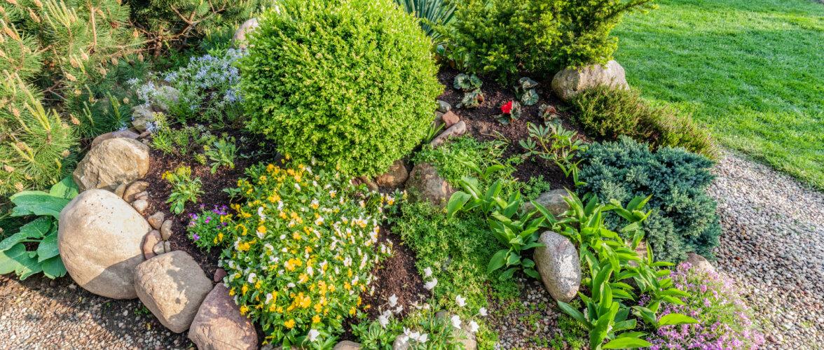 NÕUANDEID │ Puid ja põõsad võib istutada varakevadest hilissügiseni
