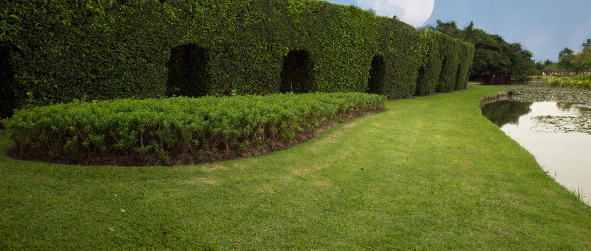 Kuufaasid aiapidamises: millal on õige aeg heki pügamiseks, taimede ravimiseks ja viljapuude lõikamiseks