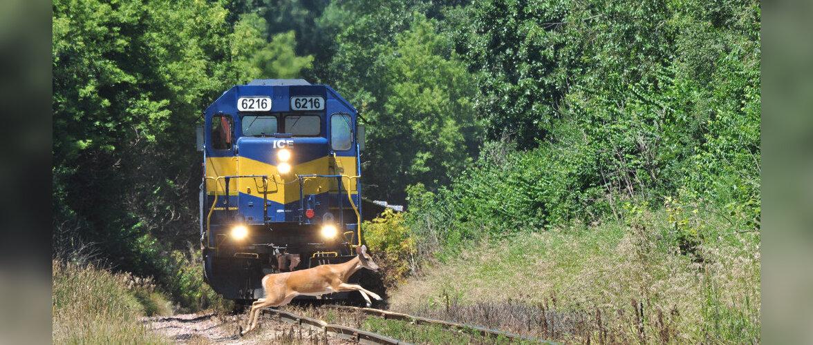 Поезда в Японии начнут лаять и фыркать, чтобы отпугивать докучливых оленей