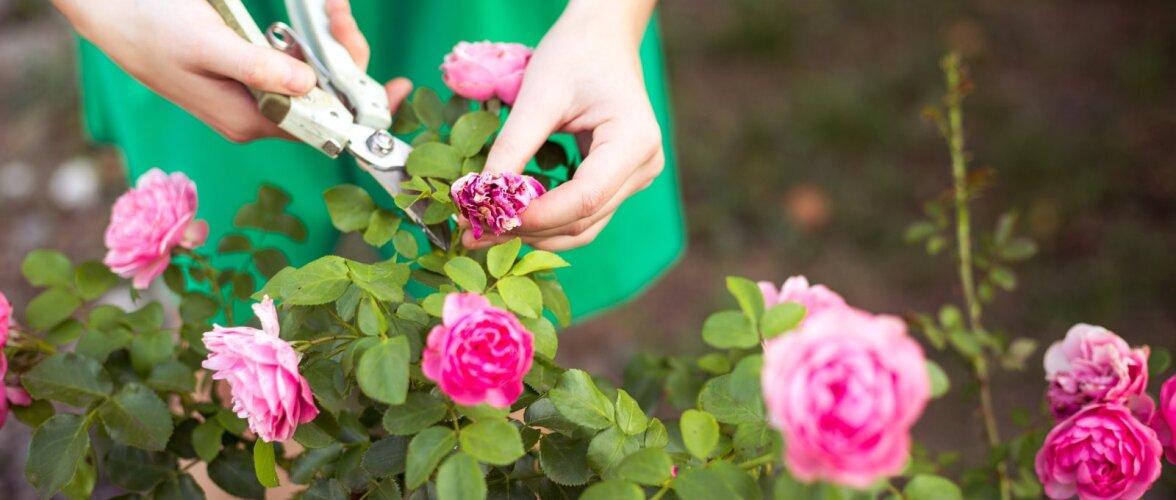 Millised aiatööd peaks ette võtma juulikuus?