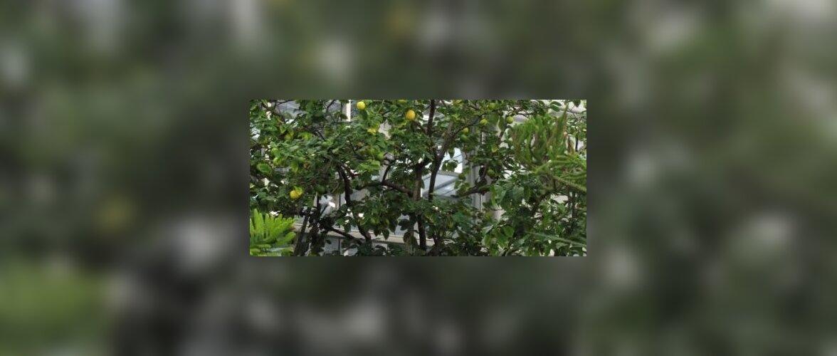 Milliseid vilju ja õisi näeb praegu botaanikaaias