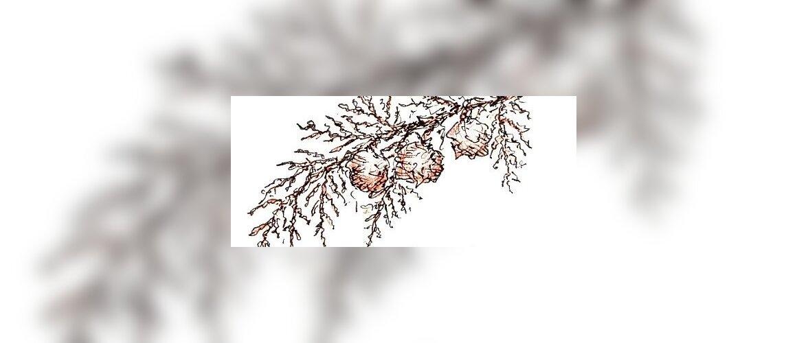 elupuu