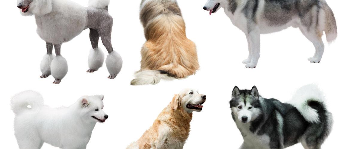 Kas teate, milleks kasutada koera karvu?