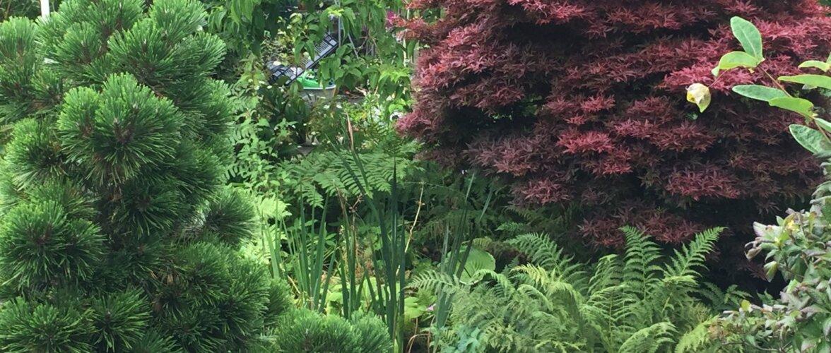 Väärt kogemusi Iirimaa aiakujundusest. Mida sealt üle võtta?