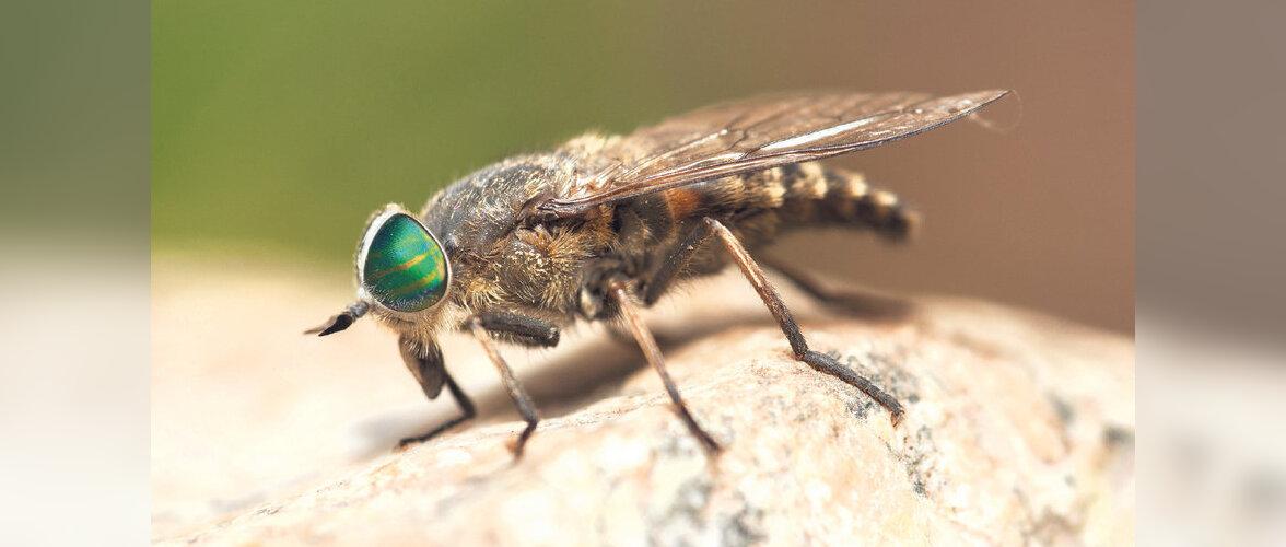 mesilase nõelamine paistetus