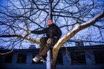Valge tänava tamm pole hiiepuu vääriline, kuid väärib siiski säilitamist. Arborist Heiki Hanso usub, et sellise puu liigutamine on tehniliselt võimalik.