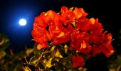 Käes on täiskuuaeg: kuidas mõjutab Kuu taimekasvu?