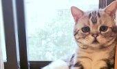 FOTOD | See ongi maailma kõige kurvem kass
