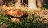 Täna on pärtlipäev: mine kallimale kosja või metsa seenele