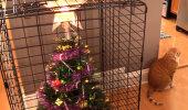 Humoorikad FOTOD | 15 ideed, kuidas jõulupuud lemmikloomade eest kaitsta