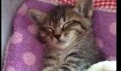 VAATA: Magusast unest ärkav kassipoeg rebib küll nunnumeetri lõhki