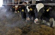 Värske kohtuotsus võib innustada kümneid piimatootjaid suurtööstuste vastu kohtusse minema