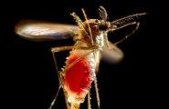 Zika viiruse ootel: WHO jagas Euroopa erineva tasemega ohutsoonidesse