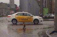 ФОТО: В центре Таллинна лиса пыталась поймать такси