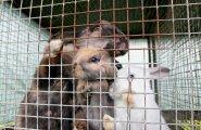Россия и Китай начнут совместно разводить кроликов под Воронежем
