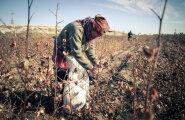 Kes need inimesed on? Raport toob välja, mitu moodsa aja orja on Eestis