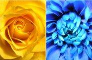Värvide iseloom: millised toonid sind rõõmsaks ja millised kurvaks muudavad?