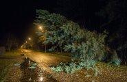 Tormikahjustused Pärnus