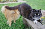 See ilus koer armastab kasse.