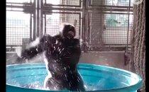 VIDEO | Vahval ahvil on nii head tantsuliigutused, mis teevad silmad ette nii mõnelegi