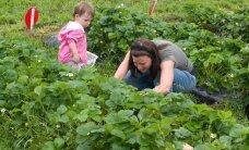 Milliseid töid tuleks aias teha juunis?
