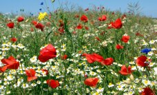 Ebameeldivad nahaprobleemid, mida suvine allergia tekitab ja õpetus, millega neist jagu saada