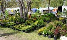 FOTOD: Türi lillelaat rõõmustab taas aiandushuvilisi