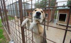 Tallinn vaidlustab Paljassaares lemmikloomade varjupaigas koerte majutamise keelu