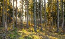 Pensionifondid noolivad metsa