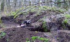 RMK looduskaamera jälgib mägrapaari