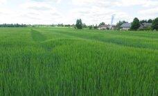 Kaasaegne viljakasvatus: uus sort peab olema midagi enamat, kui lihtsalt hea