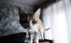 Uuring: kassi omamisel on seos skisofreeniaga