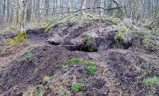 RMK looduskaamera jälgib pisipere ootel mägrapaari