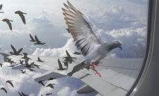 Veidrad põhjused, mis on sundinud piloote lennukit ringi pöörama