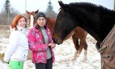 Пока на общественных началах: под Нарвой появился приют для лошадей
