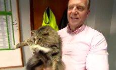KURIOOSUM! Inglismaal aasta tagasi kaduma läinud kass leiti kohast, kust keegi teda otsida ei taibanud
