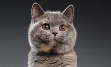Michio-michio ja Chh-chh-chh: Loe ja avasta, kuidas kasse mujal maailmas kutsutakse
