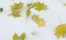 ФОТО читателя Delfi: Бабочки на снегу