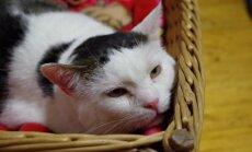 Suurest stressist põiepõletiku all kannatav kass Robi ootab perekonda, kes tema silma särama paneks